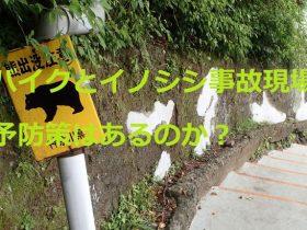 バイクとイノシシの事故現場!予防策はあるのか?