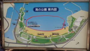 海の公園 潮干狩り ポイント