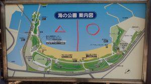 海の公園 アサリの採れる場所