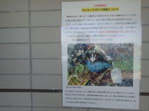 海の公園 カツオのエボシ 危険生物