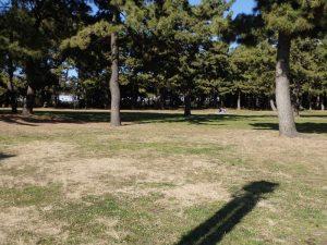 海の公園 芝生 ランチ 昼食