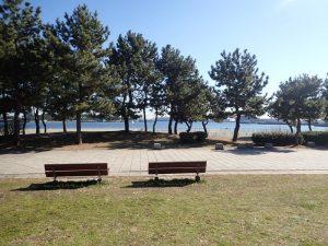 海の公園 松林 日陰