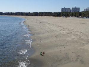 海の公園 潮干狩り 砂浜
