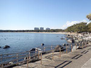 海の公園 磯場