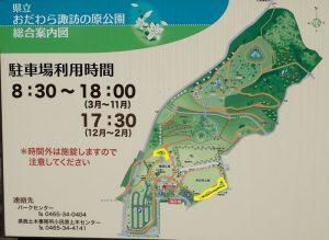 県立おだわら諏訪の原公園 アジサイ