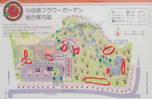 小田原フラワーガーデン テーブと椅子 地図