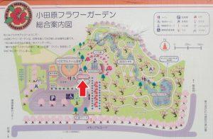 小田原フラワーガーデン カフェ ハイビスカス 地図