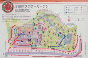 小田原フラワーガーデン 桜 地図