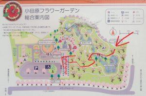 小田原フラワーガーデン 近道ルート