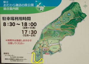 県立おだわら諏訪の原公園 ソメイヨシノ市道