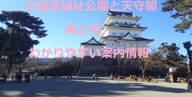 小田原城址公園と天守閣梅と桜 わかりやすい案内情報