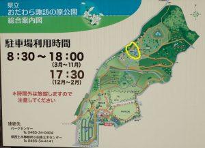 県立おだわら諏訪の原公園 ネムノキ