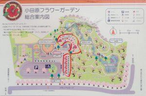 小田原フラワーガーデン バラ園