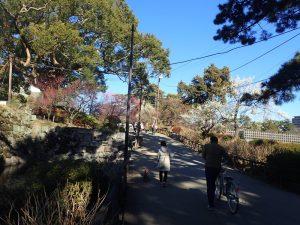 小田原城址公園 梅