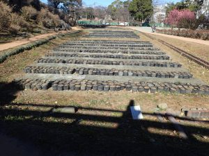 小田原城址公園 花菖蒲
