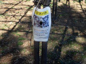 小田原城址公園 銅門広場 クマバチ