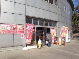 小田原フラワーガーデン カフェ ハイビスカス