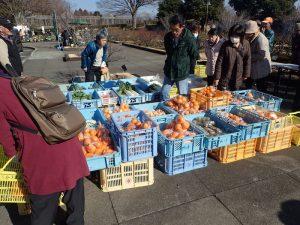小田原フラワーガーデン 朝市 くだもの 野菜