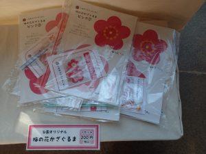 小田原フラワーガーデン 梅の花かざぐるま