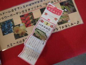 小田原フラワーガーデン お花見くじ