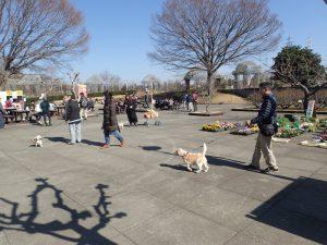 小田原フラワーガーデン ペット 犬(いぬ)