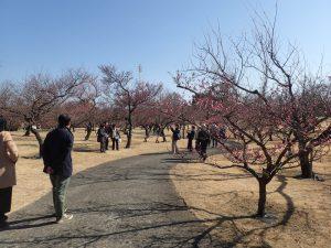 小田原フラワーガーデン 渓流の梅園 歩道