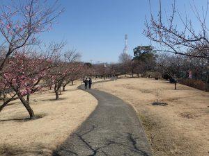 小田原フラワーガーデン 渓流の梅園 芝生とベンチ
