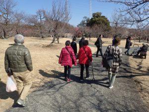 小田原フラワーガーデン 渓流の梅園 杖 歩行