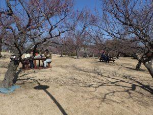 小田原フラワーガーデン 渓流の梅園 ベンチ