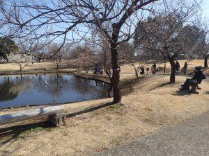 小田原フラワーガーデン 渓流の梅園 ハナショウブ池