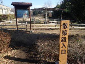 県立おだわら諏訪の原公園 皇帝ダリア 植え込み