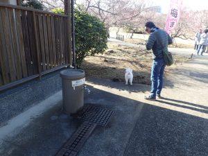 小田原フラワーガーデン 梅園内 トイレ前 井戸水