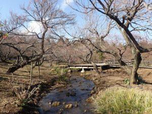 小田原フラワーガーデン ハナジョウブ池まので川