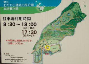 県立おだわら諏訪の原公園 カンヒザクラ