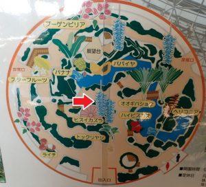 小田原フラワーガーデン トロピカルドーム