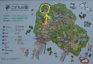 こどもの国横浜 椿と金花茶