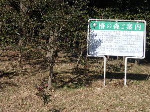 こどもの国横浜 椿の森