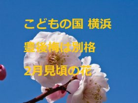 こどもの国横浜 豊後梅は別格 2月見頃の花