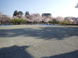 小田原城 銅門広場 桜
