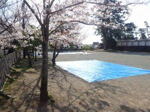 小田原城址公園 銅門ひろば さくら