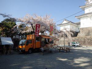 小田原城 桜 本丸広場