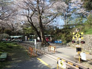 小田原城 桜 こども遊園地