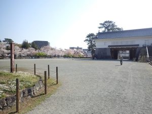 小田原城 桜 銅門広場