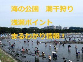 海の公園 潮干狩り 浅瀬ポイントまるわかり情報
