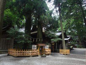 高千穂神社:夫婦杉