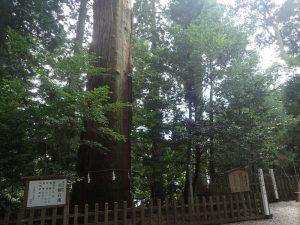 高千穂神社:御神木(秩父杉)