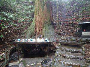 天岩戸神社:東本宮、御神水、御神木