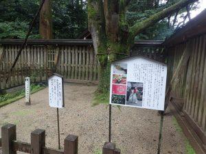 天岩戸神社西本宮:招霊の木