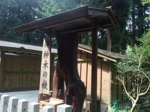 草部吉見神社:御神木の枝