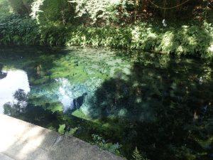 白川水源:水源、撮影ポイント